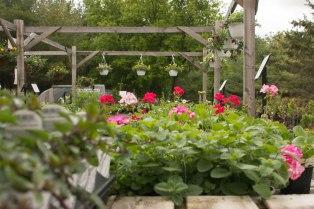 Annuals at the Carp Garden Centre